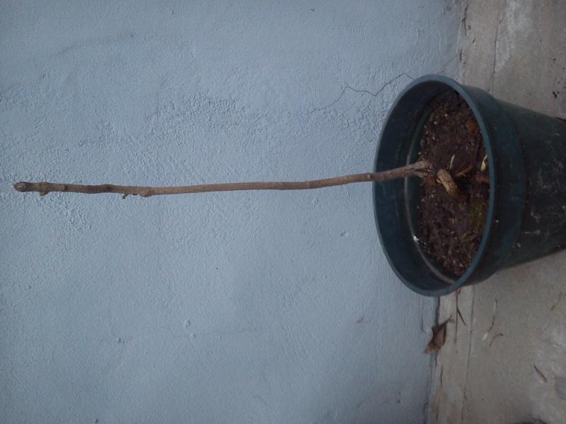 Poda de un Lapacho. 2vb2cfd