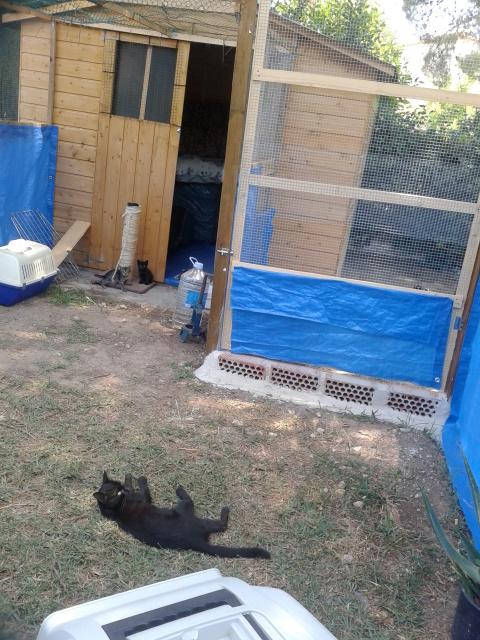 """Residencia felina """"Bon Cat"""" -Valencia- 33js0hi"""