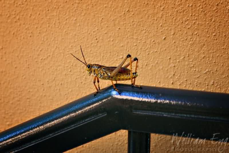 Critters of Coronado 6tlnw6