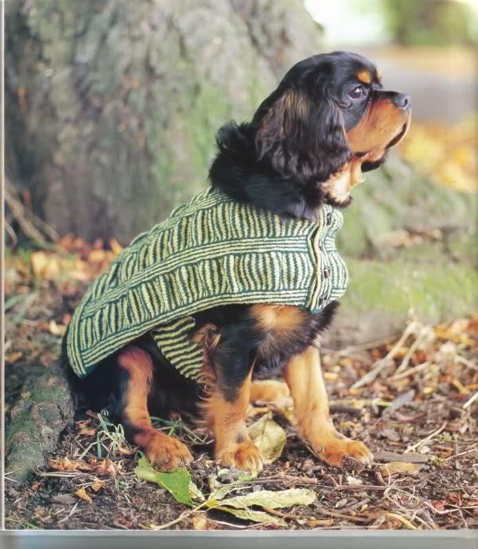 modelo de ropa para perros Ogcidg