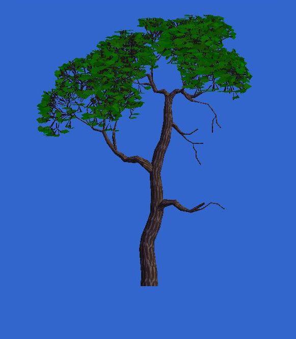 Software para diseño de bonsai Rvab5w