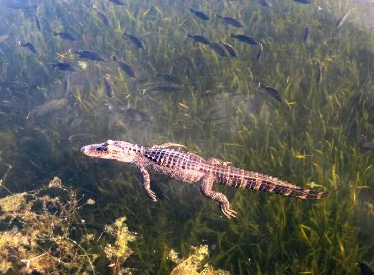 Critters of Coronado Zuc6