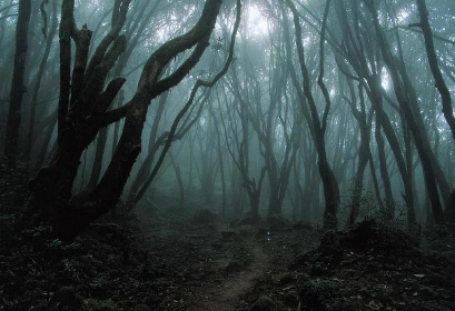 Forest of Dark Fog and Stone of Nightmares