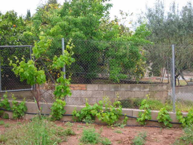 Nuestro jardín de Sa Possessió - Página 23 2j1lkjm
