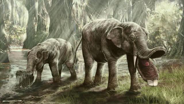 Elefantes Prehistóricos 670eg8
