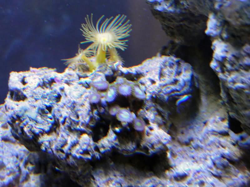 SERA Biotop 130 Nano Reef - LPS e Moles 8vq7x4
