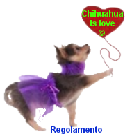 Chihuahua is love forum Dnll5u