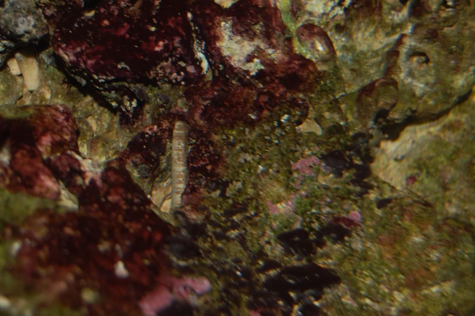 Identification d'un ver et d'un coraux ou algue? Ff7m20
