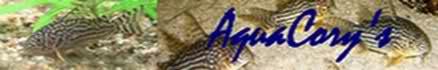 150L, Corydoras Sauvages! - Page 2 W01hqq