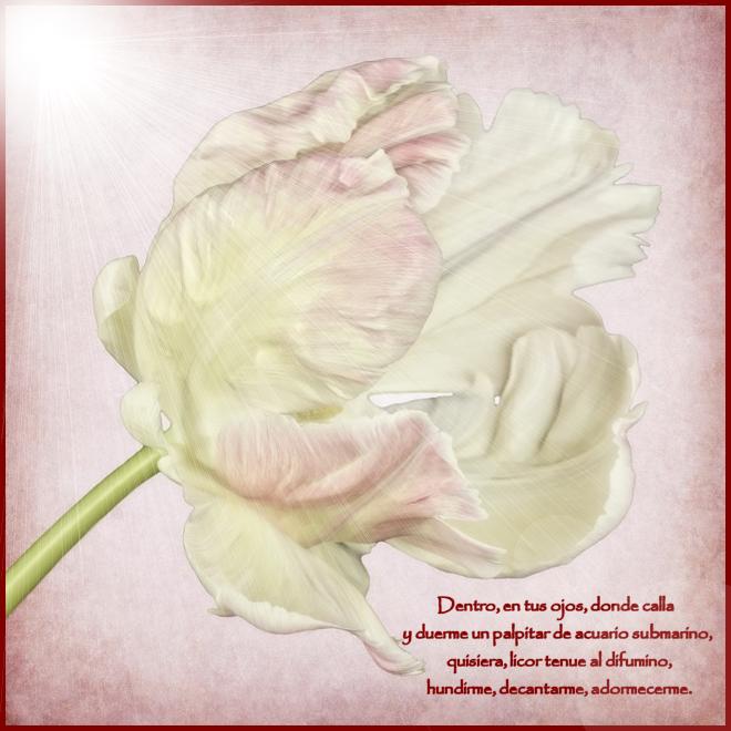 ¡¡¡¡Un tulipan para ti cada dia!!! 107t8qv