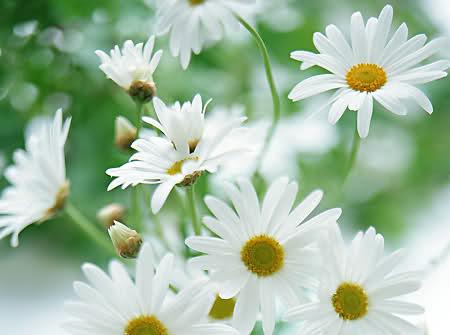 Ý nghĩa ngày sinh trong 12 tháng theo các loài hoa 1zyab8p