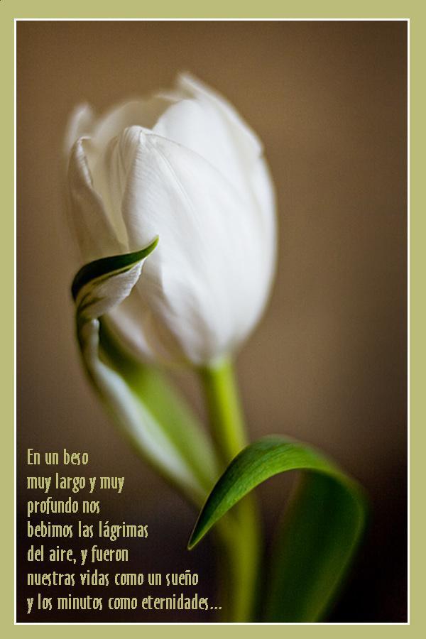 ¡¡¡¡Un tulipan para ti cada dia!!! 2nakac3