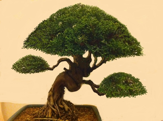 Poda y pinzado juníperus 2rh0dgo