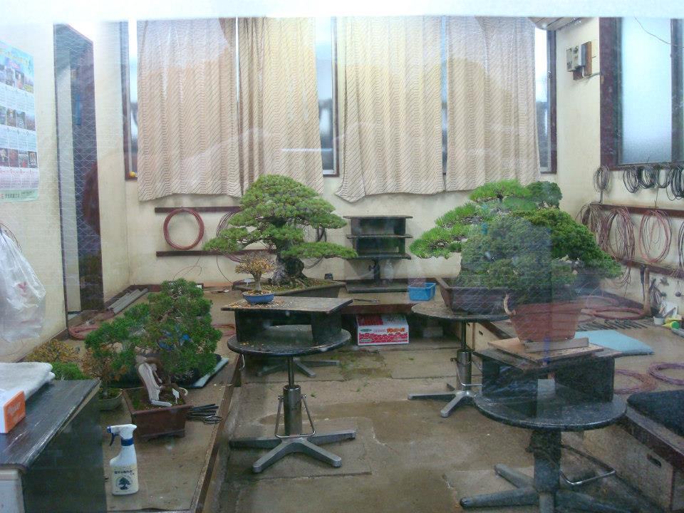 Presentación de los bonsais y la casa de Masahiko Kimura. - Página 2 9sq638