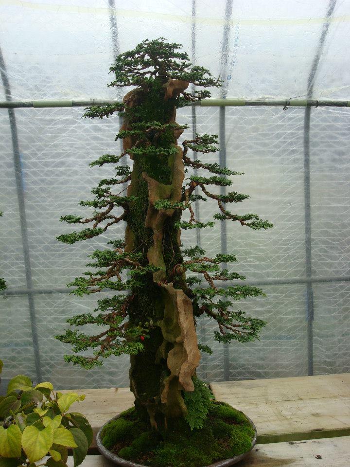 Presentación de los bonsais y la casa de Masahiko Kimura. - Página 2 A4rixk