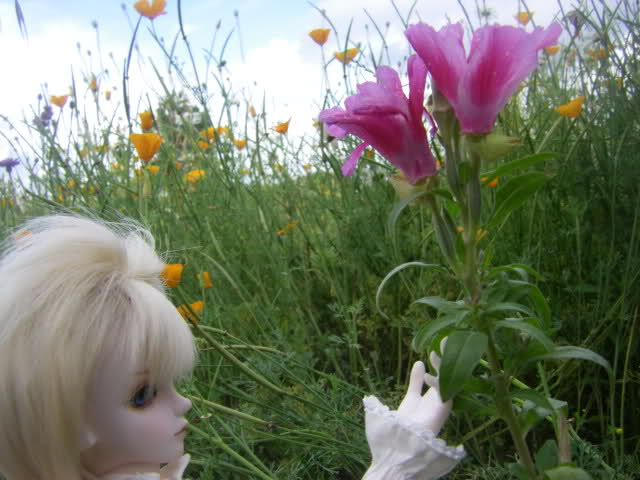 Judith (CharmedDoll Rhea) p.18 16.09.19 15xpkix