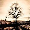 MISERY DISORDER || Inspiré de la série Dark Angel  23w6078