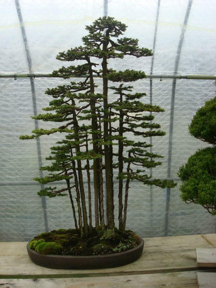 Presentación de los bonsais y la casa de Masahiko Kimura. - Página 2 2921f8m