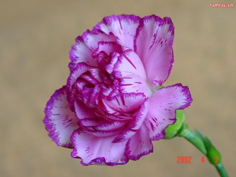 Ý nghĩa ngày sinh trong 12 tháng theo các loài hoa 2aa0do7