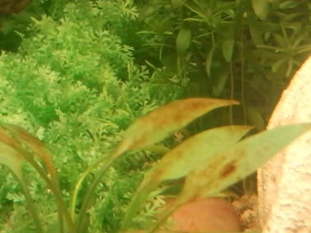 algue brune 2f0audi