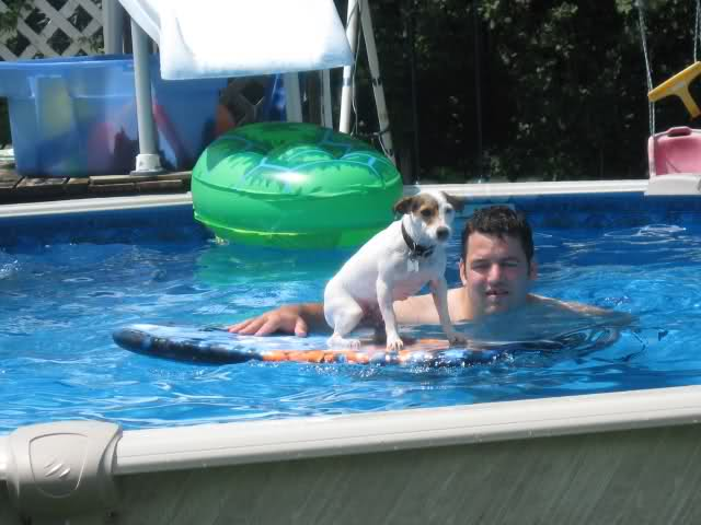 ma chienne Jack Russel 30arz3l