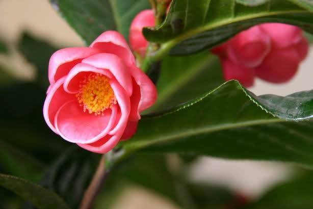 Ý nghĩa ngày sinh trong 12 tháng theo các loài hoa 5vd2tj