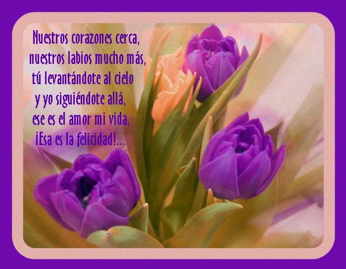 ¡¡¡¡Un tulipan para ti cada dia!!! E6vnsm