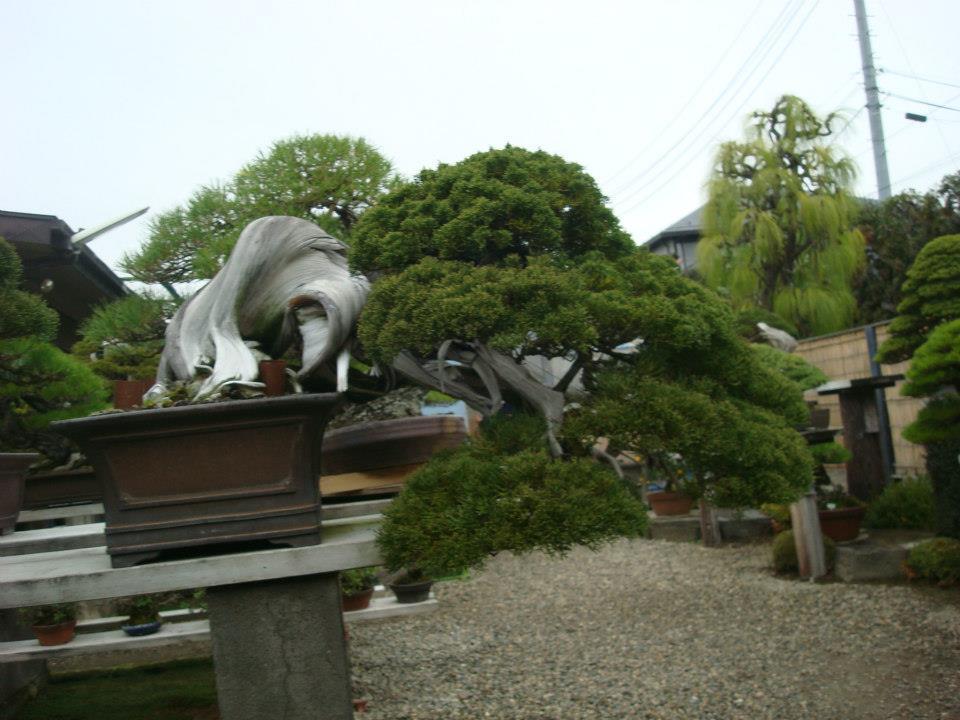 Presentación de los bonsais y la casa de Masahiko Kimura. - Página 2 R04myr