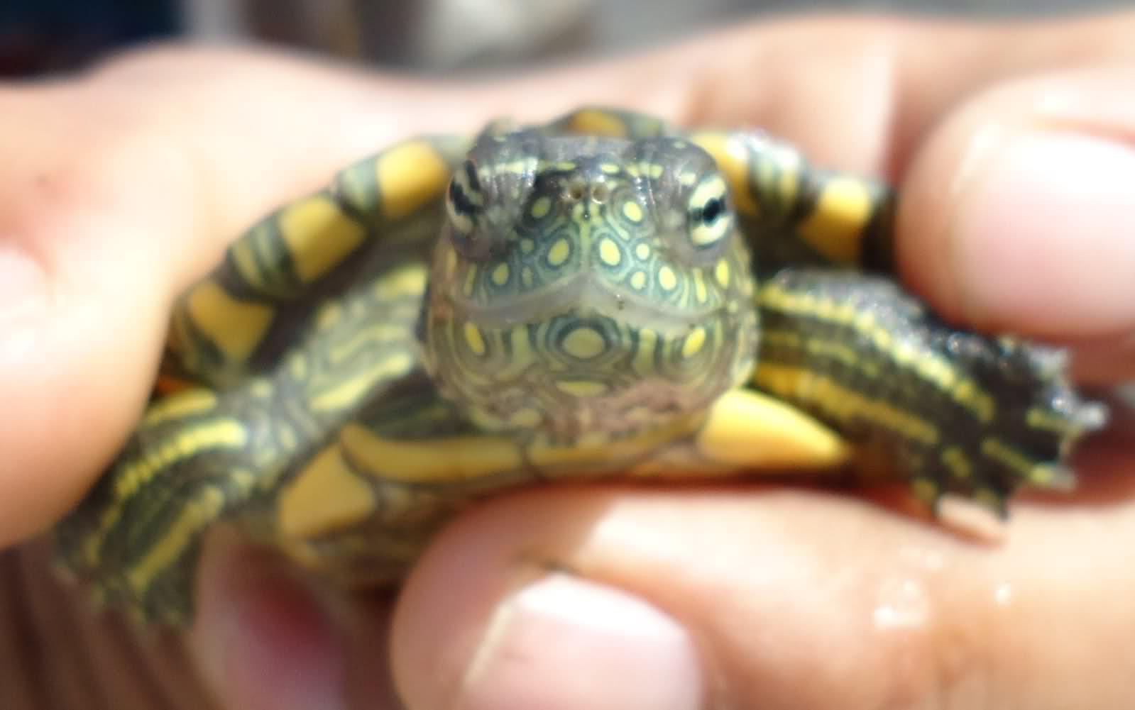 ¿Qué tortuga es? 2luvol5