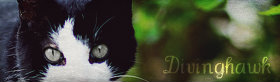 Who are you? [Windclan deputy looking for friends!] 2preic0
