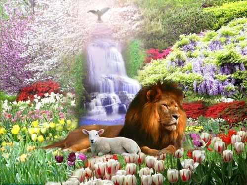 Chien, chat, etc… retrouverons-nous nos animaux de compagnie au Paradis ? 2r73m1w