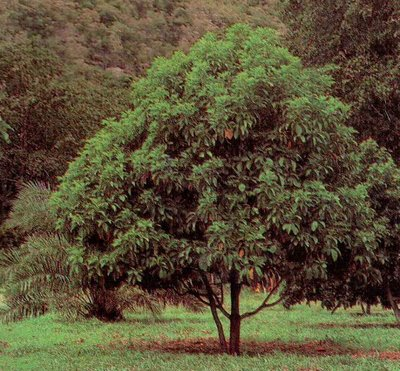 AGUACATE  2z83f28