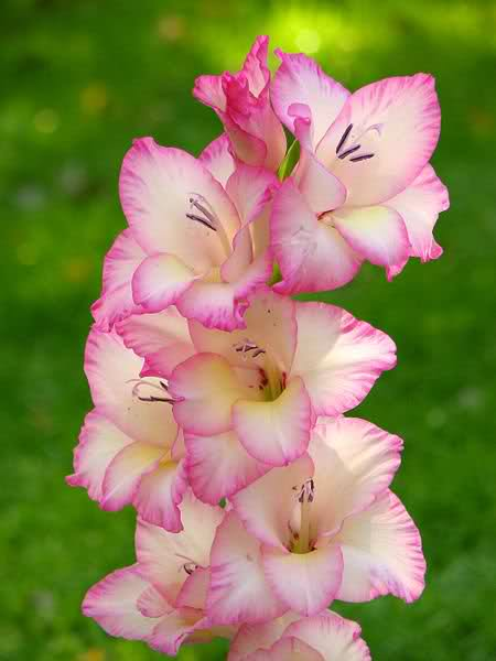 Ý nghĩa ngày sinh trong 12 tháng theo các loài hoa 30w0d9l