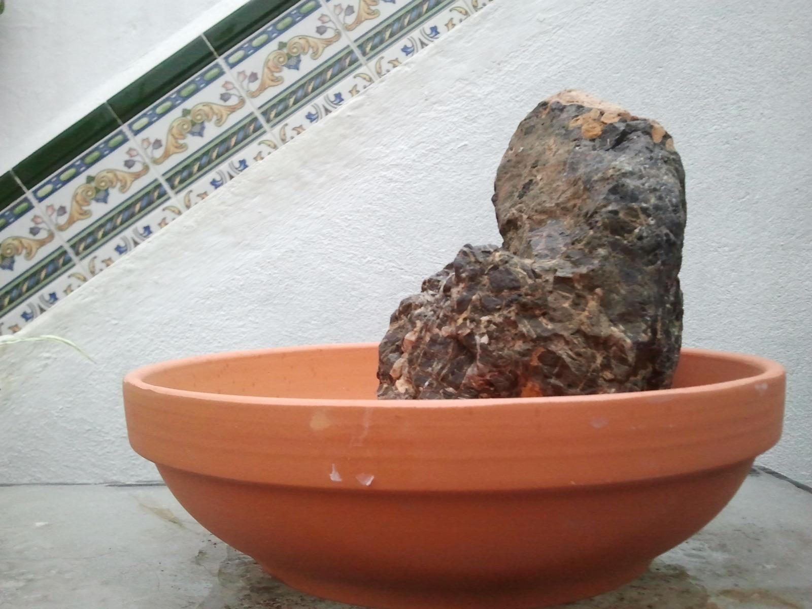 Higuera sobre piedra B46d0i
