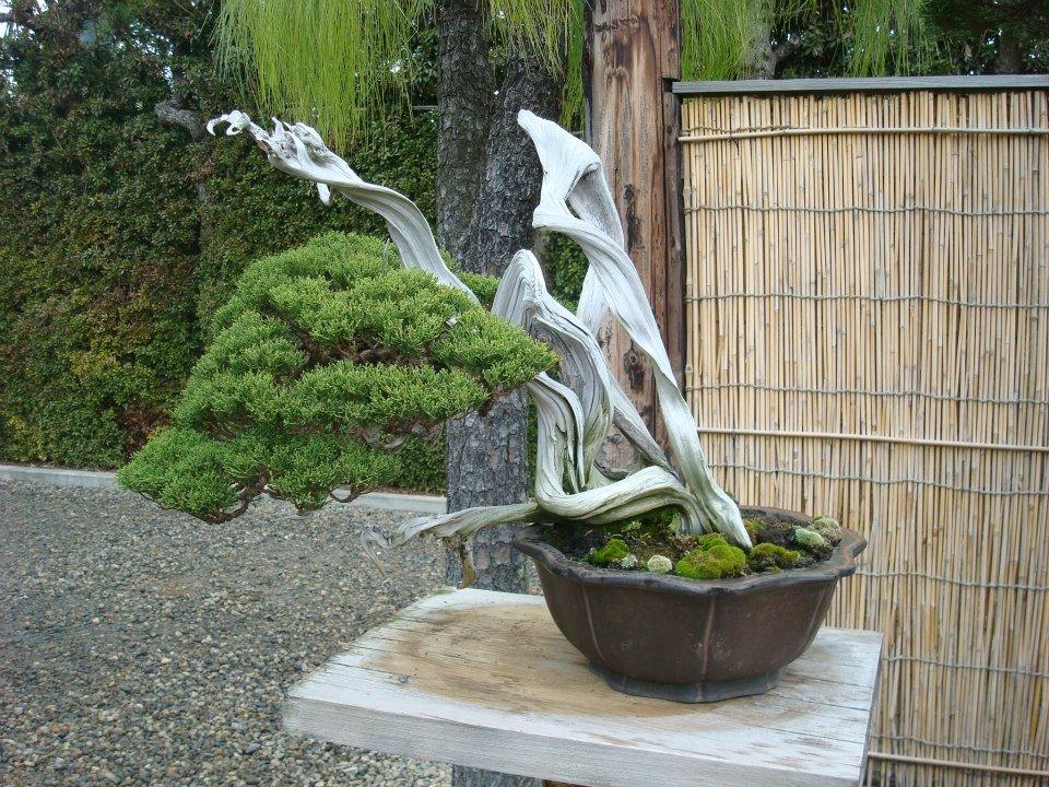 Presentación de los bonsais y la casa de Masahiko Kimura. - Página 2 Ubyww