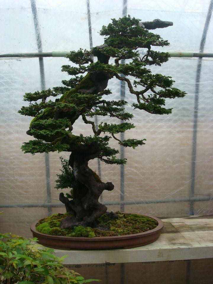 Presentación de los bonsais y la casa de Masahiko Kimura. - Página 2 11boyon