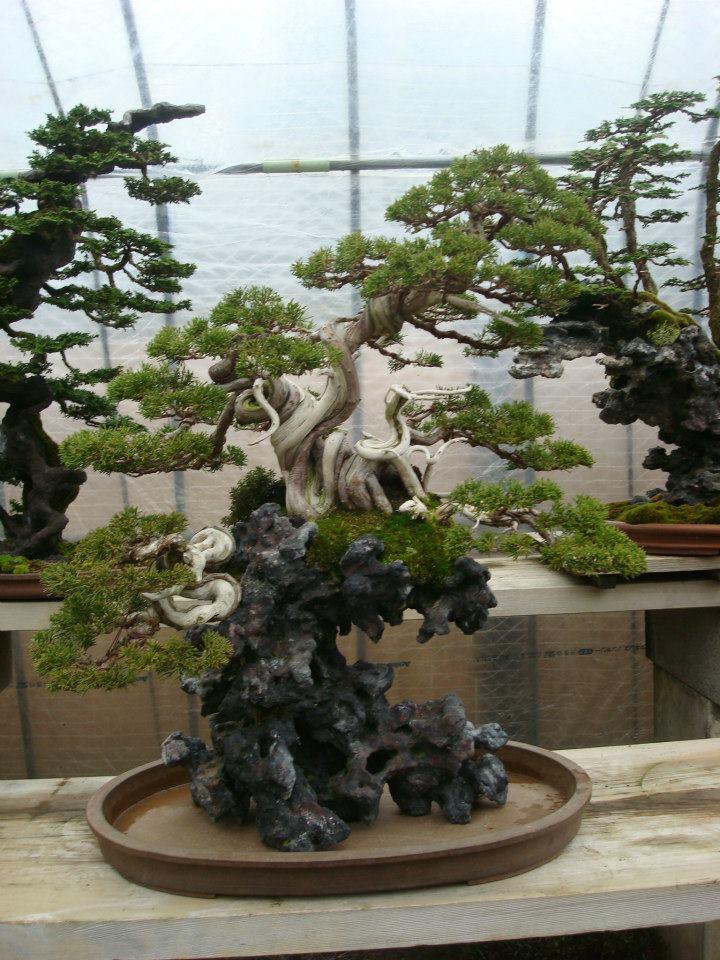 Presentación de los bonsais y la casa de Masahiko Kimura. - Página 2 15hjuv8