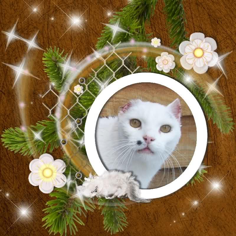 Noël, chat en attente d'un sauvetage... 20gcf38