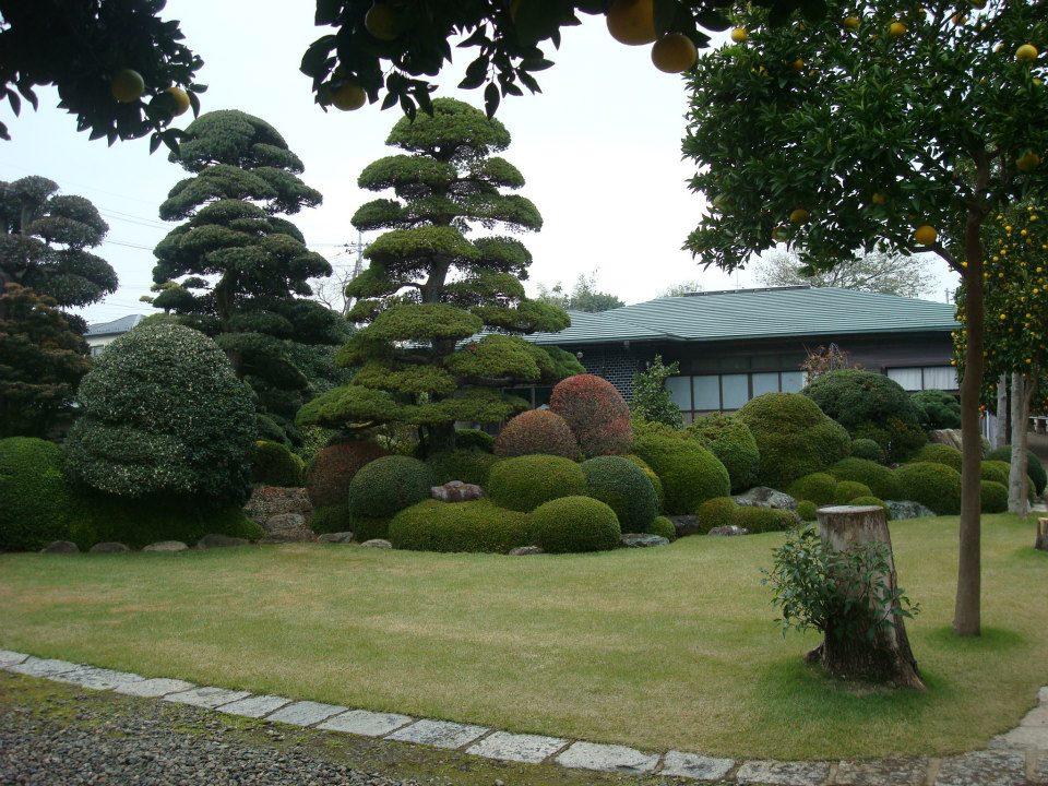 Presentación de los bonsais y la casa de Masahiko Kimura. - Página 2 2exyhhx