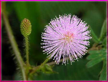 Ý nghĩa ngày sinh trong 12 tháng theo các loài hoa 2hnugec