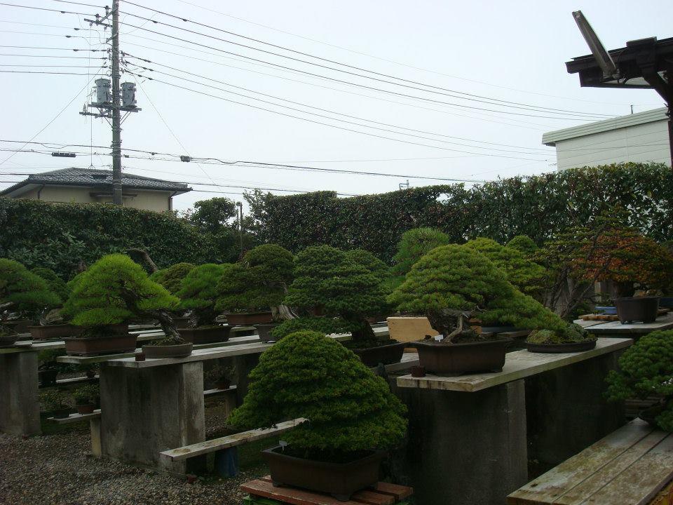 Presentación de los bonsais y la casa de Masahiko Kimura. - Página 2 2i0sra8