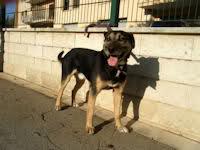 El Mundo Animal - Foro y adopciones de animales - Portal 2w53c6r