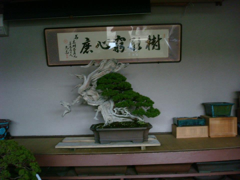 Presentación de los bonsais y la casa de Masahiko Kimura. - Página 2 32zq7ix