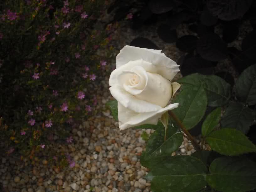 Los Rosales de Epi - Página 6 4vs8d3