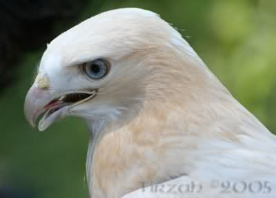 Animais albinos (imagens incriveis) B9ayr6