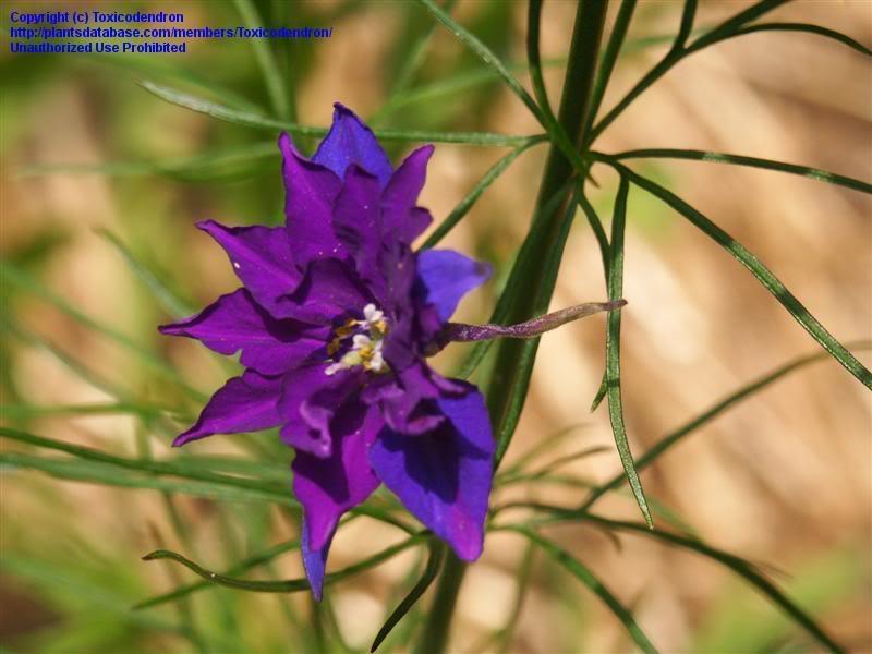 Ý nghĩa ngày sinh trong 12 tháng theo các loài hoa Fjdx5e