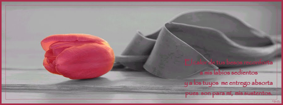¡¡¡¡Un tulipan para ti cada dia!!! Xnsxme