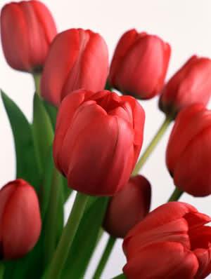 Ý nghĩa ngày sinh trong 12 tháng theo các loài hoa 20u4bk3