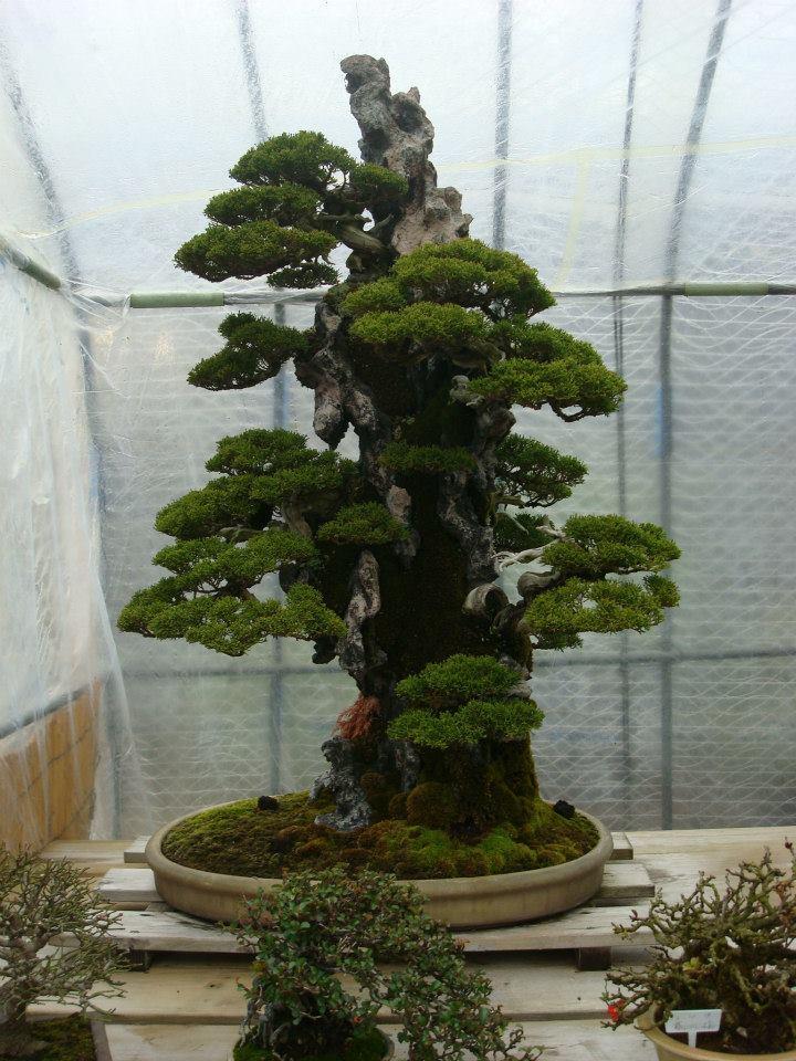 Presentación de los bonsais y la casa de Masahiko Kimura. - Página 2 219q9tt