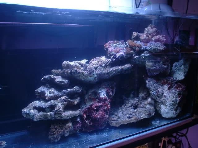 réalisation de pierres artificielle pour récifale 291c3k2